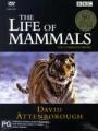 Attenborough - Life of Mammals